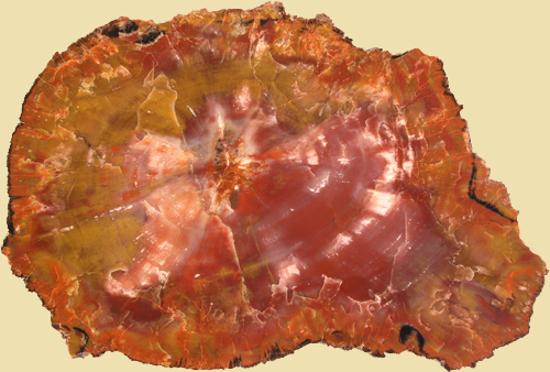 Afbeelding van Versteend hout schijf Arizona, circa 300x195 mm
