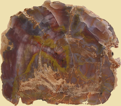 Afbeeldingen van Versteend hout schijf Arizona, circa 185x145mm