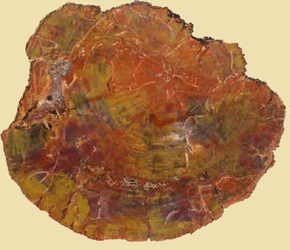 Afbeeldingen van Versteend hout schijf Arizona, circa  350x280x25mm