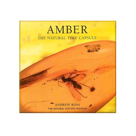 Afbeelding van Amber, The Nature Time Capsule