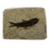 Afbeelding van Visfossiel Knightia Eoceana